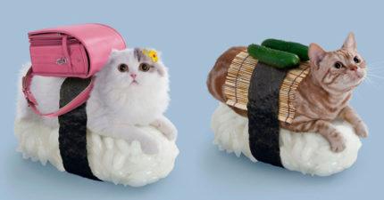 13款會讓你「萌到胃口大開」的貓咪系壽司照片!