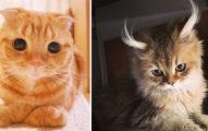 29隻「世界上最爆美可愛」的完美貓咪,看完時你已經是信徒了!