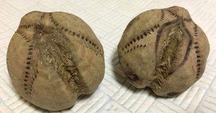 她在海邊發現上百顆外型像棒球的「奇怪異形蛋」,好奇撿回家她說:「開始怕它會攻擊」。