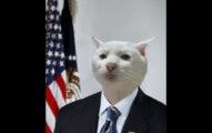 分享這張「可愛貓咪穿西裝的照片」就會慘遭臉書封鎖,仔細看照片會覺得哪裡怪怪的...