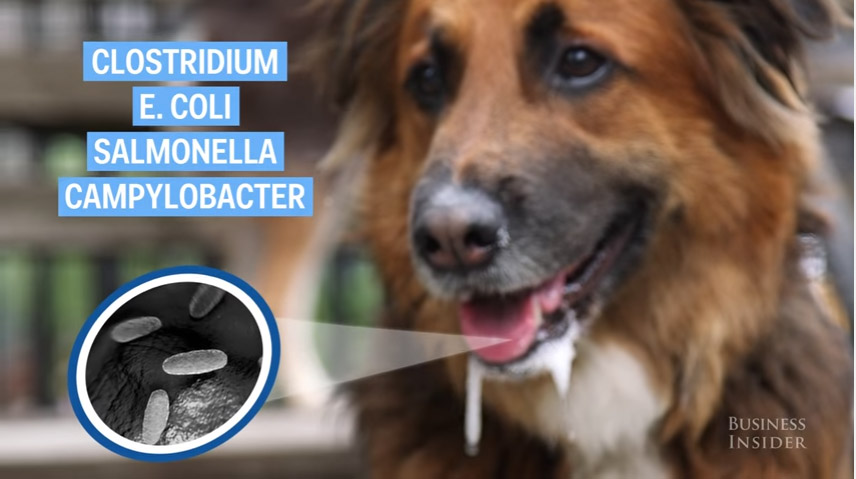 還好你平時沒有讓狗狗親你的嘴 專家指出嚴重危險風險!