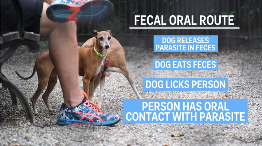 還好你平時沒有讓狗狗親你的嘴,專家指出嚴重危險風險!