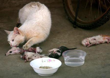 殘忍兇手用玩具槍打小貓後虐待致死還「擺在貓媽媽眼前」,貓媽媽的動作讓大家都淚崩了...