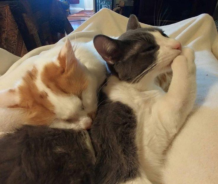 盲眼貓咪被收養「到新家卻被排擠」超寂寞,主人「帶他去收容所」找到幸福!