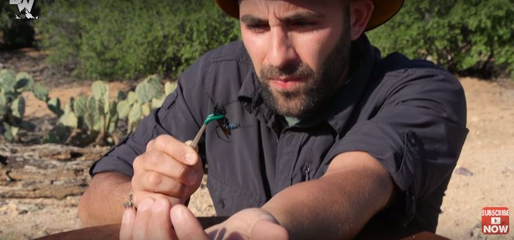 男子不怕死挑戰被「世界最猛沙漠毒蜂」螫一下,被螫後立刻全身僵硬...(影片)