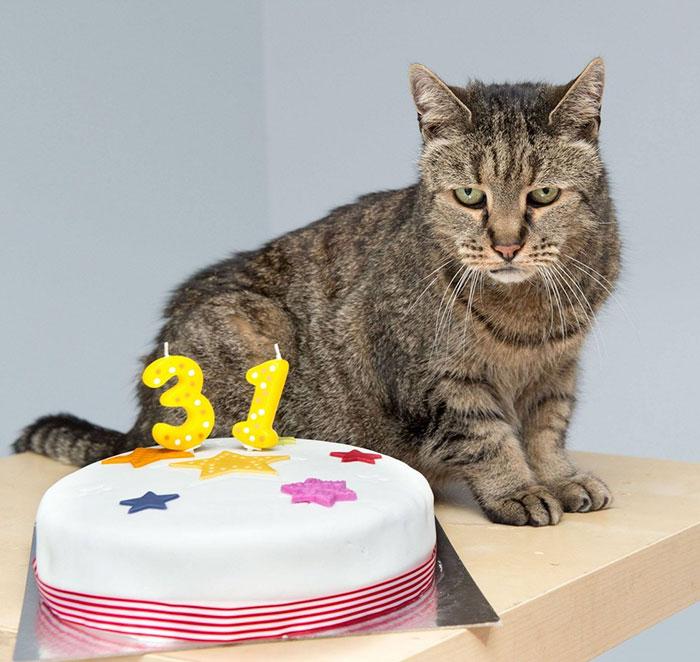 世界上最老貓咪才剛過141歲生日,他確切的出生年代可能你都還沒出生呢!