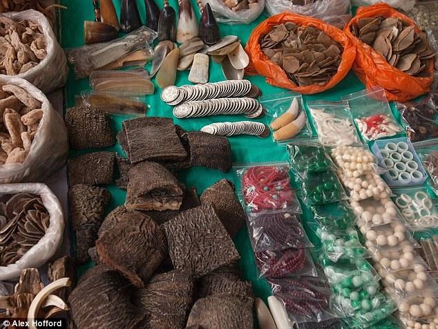 動保團體假扮成買家潛入非法交易揭露「亞洲象被殘忍扒皮」可憐真相,全都是為了滿足中國客人的病態需求!