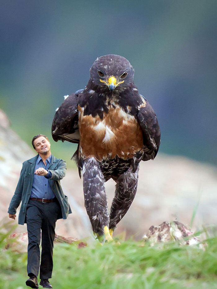 攝影師拍到這屌爆的「黑幫老鷹走路」照,讓網友們的P圖戰火再度被燃起...(40張)