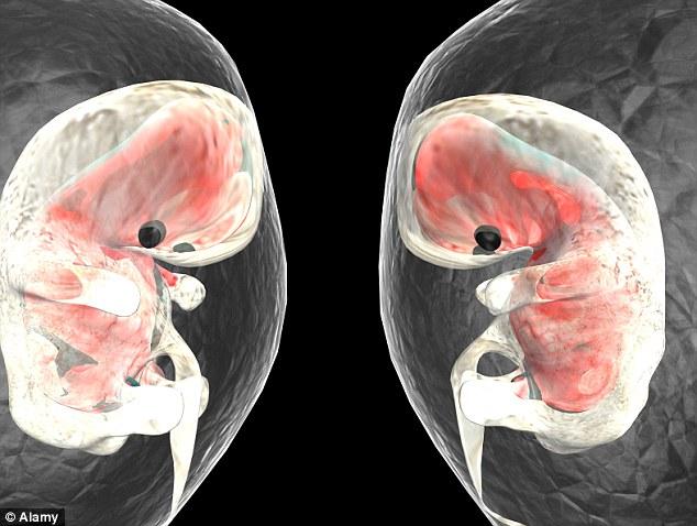 驚人發現:「胚胎在受孕16天後心臟就開始跳動」,以後心臟病患者會大幅降低!