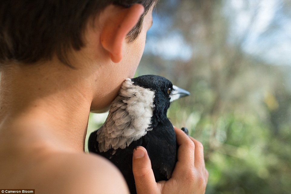 The Bloom family hope their new additions, like Penguin, will return to the wild as soon as they are strong enough to survive on their own