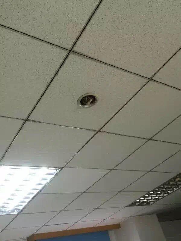同事傳了辦公室天花板的照片給他,仔細一看萌嚇到說:「這是新型的監視器嗎?!」