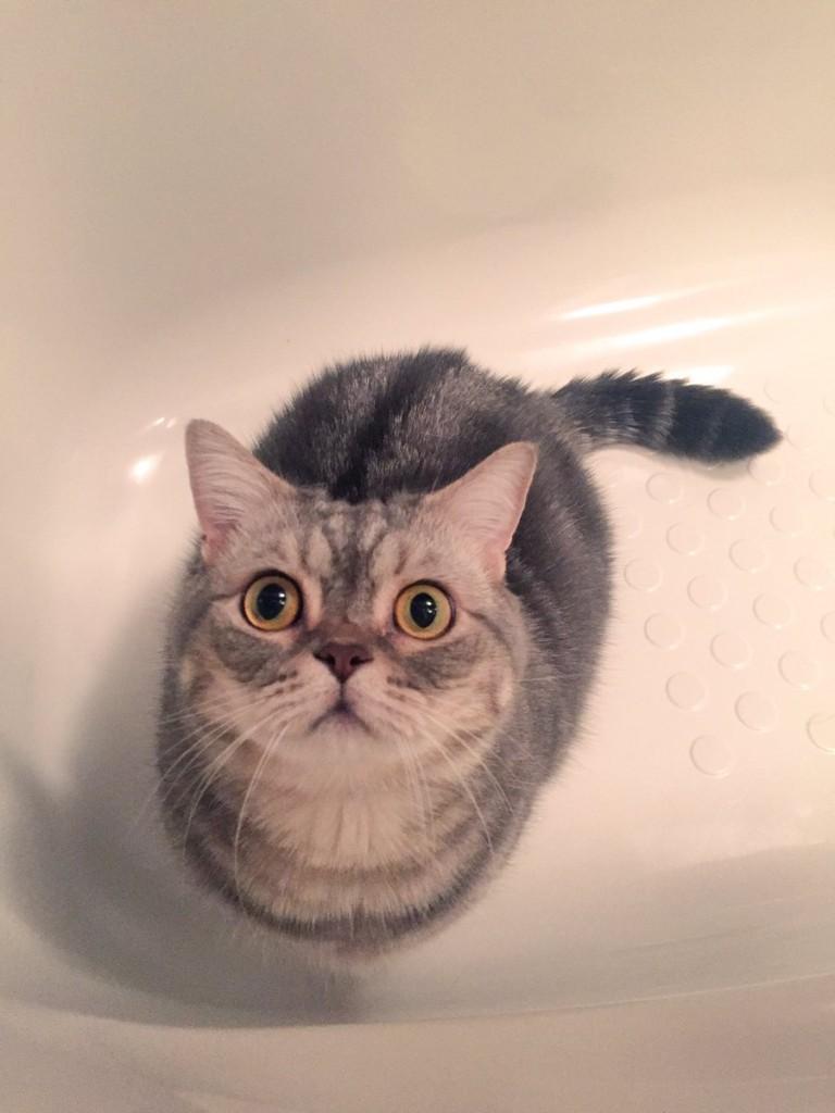 貓咪一直待在浴缸盯著排水孔不肯離開,最後還抬頭一臉「原來我是隻貓」的表情已經笑翻所有網友了!