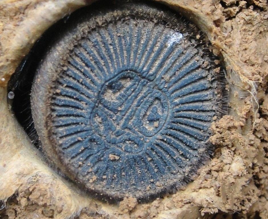 農夫在田裡挖出「古代銅幣」超驚喜 下一秒看到「完全體」嚇壞:會動!
