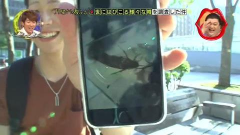 日本綜藝節目讓北海道居民看「蟑螂」的樣子,民眾竟拍照說「好感動!」還自拍留念。