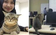 這隻貓咪走進教室聽課,他超不客氣表現出學生「不敢說出的心聲」超爆笑!