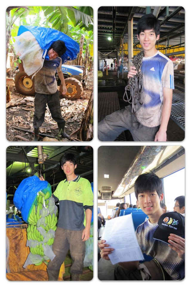 澳洲打工族「一週賺22k」:憑什麼要回台灣領月薪22k? 怒嗆:「台灣只知道要遊客買鳳梨酥」
