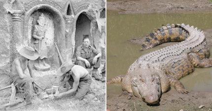 二戰上千名日軍被沼澤中巨大怪鱷殺到只有20人生還」,書中記載「士兵經歷過最恐怖的一晚」。