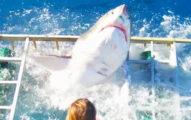 暴走的大白鯊「衝進了鐵籠子」裡,而且裡面竟然還有觀光客在...