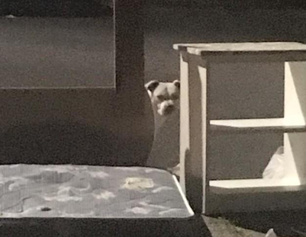 被拋棄的狗狗1個月來都在外頭「等著不會回來的主人」令人鼻酸,最後靠聊天才說服他!