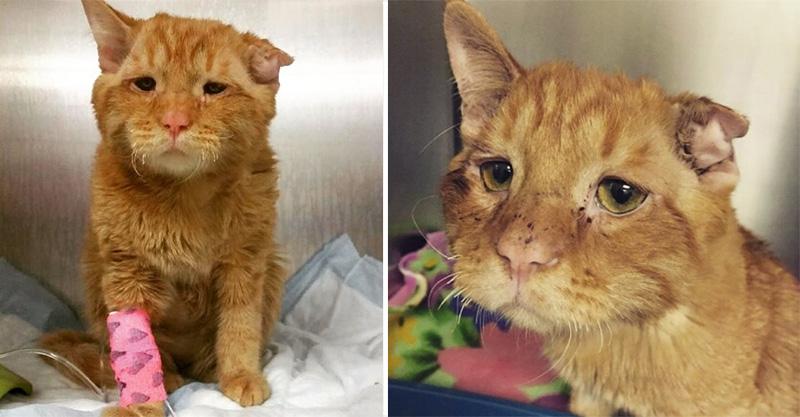 「世界上最慘的貓咪」在收容所不吃不喝 被人領養回家1小時後「發生的變化」太感人了