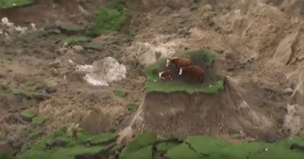 紐西蘭7.5地震震到出現陸地小島,牛家庭困在小島上「畫面太暴力!」