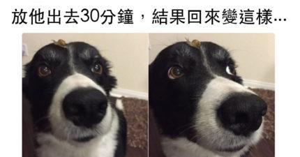 21張證明「狗狗是世上最可❤的生物」呆呆Q萌照