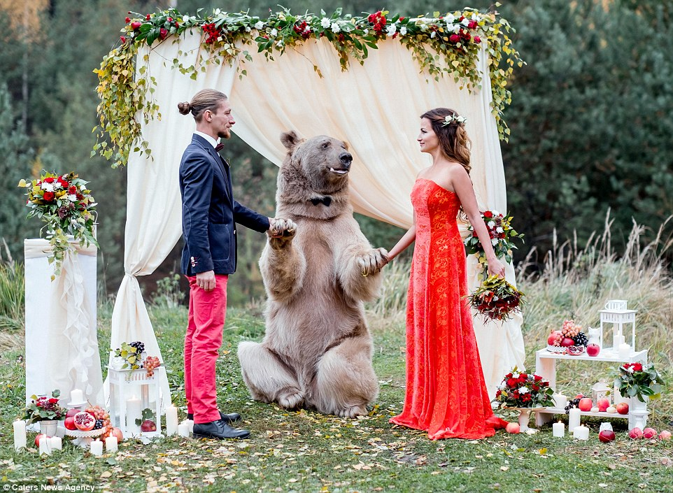 俄羅斯新人請來「巨大棕熊」主持婚禮交換戒指,戴著黑色領結跟新郎合照萌到搶走風采!