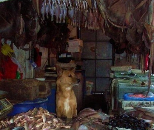 老闆看狗狗可憐就好心收養了,沒想到狗狗超專業讓他生意大好!