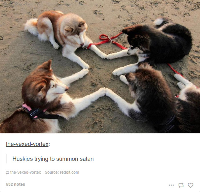 31張照片證明「哈士奇就是狗界的諧星」的超爆笑照片,#23比妳男友帥氣一百倍!