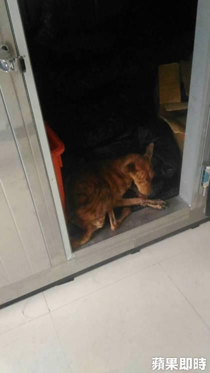 他去收容所領愛犬遺體,一打開遺體冰櫃他嚇傻!