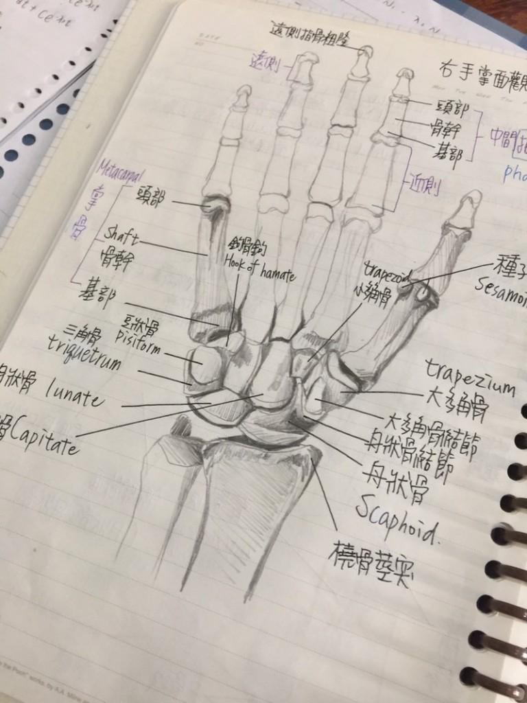 她分享出同學超狂解剖筆記,網友跪著說:「你確定你同學是念醫學院的?!」