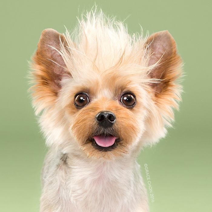 8張「證明髮型對狗狗也很重要」的狗狗剪毛前後比對圖。