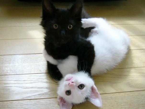 30張證明「不管黑貓白貓,只要是貓就該被愛」的可愛照!