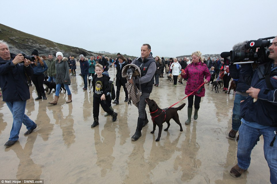 Mark Woods stole the nation's heart after he appealed for fellow dog lovers to join him on his last walk with Walnut, the 18-year-old whippet he has had since a puppy
