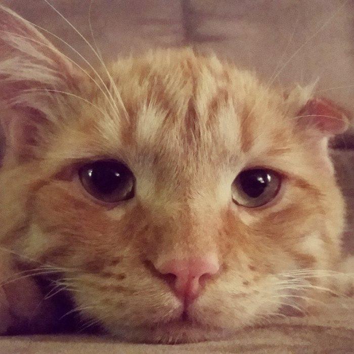 「世界上最哀傷的貓咪」在收容所不吃不喝 被人領養回家1小時後「發生的變化」太感人了