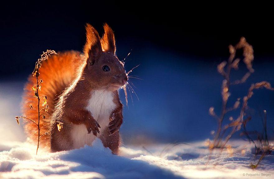 35張讓你看到動物比人屌的「活生生捕捉野生動物」照!