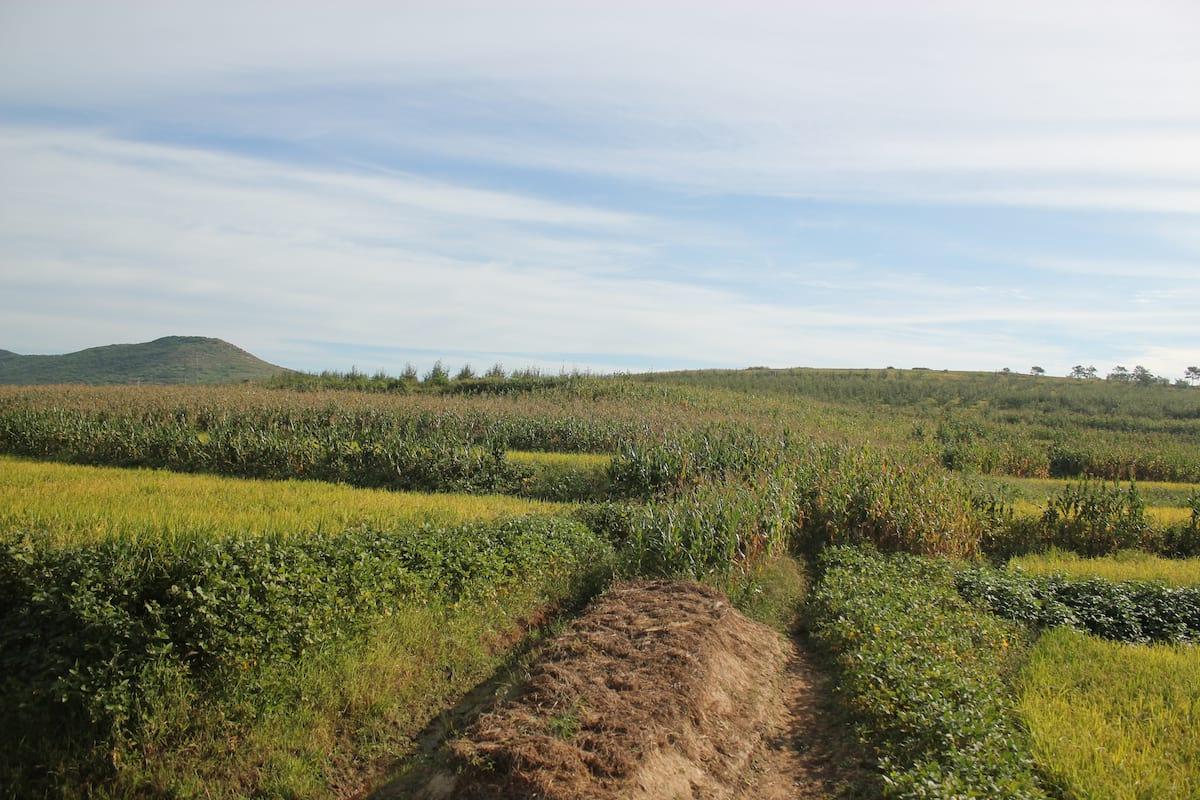 30300UNILAD imageoptim Potato Mound near Nampo North Korea Vegans And Vegetarians Actually Help Kill Animals, Heres How