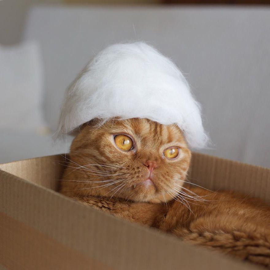 13隻「戴上自己掉的毛做成的毛帽」的霸氣貓咪!