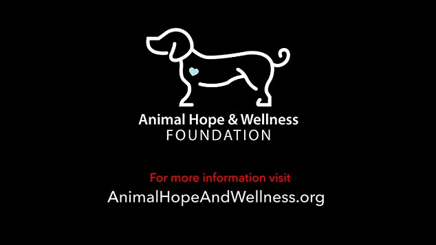 Animal Hope & Wellness Foundation made the film about dog meat markets in Asia