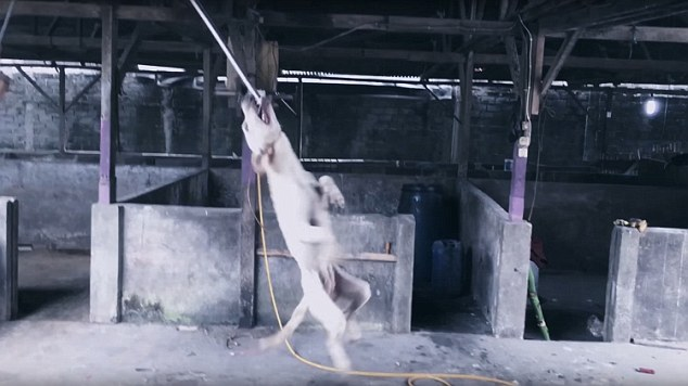 The aim was to shut down slaughterhouses and rescue 1,000 dogs from the dinner table