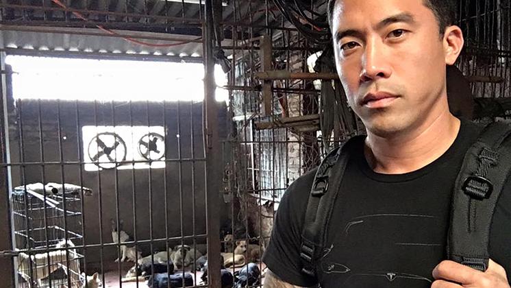 知名動保人士玉林狗肉節救出上千隻狗「如今700隻慘死」,志工心碎爆料「死在屠宰場還更幸福...」