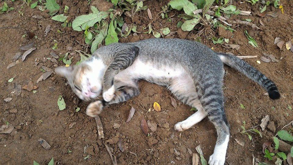 這隻心痛的貓咪花了「一整年」的時間,每天在過世主人墓前哭泣...