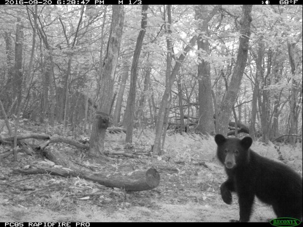 動物學家在森林裡拍到4腳奔跑「野生裸人類」,學者說:「至少不只我拍到...」