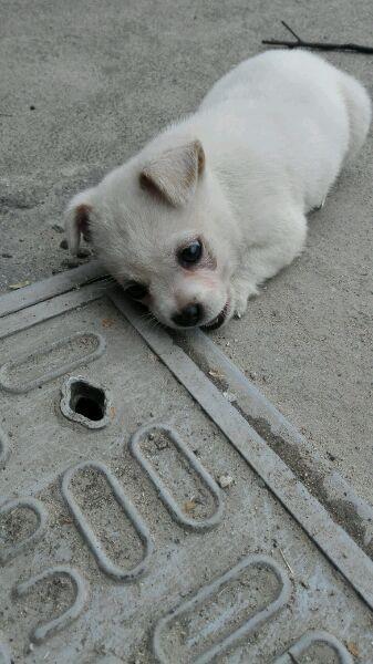 他看小狗狗趴在水溝蓋上哭,詢問出背後「偉大母親的故事」...(有洋蔥)