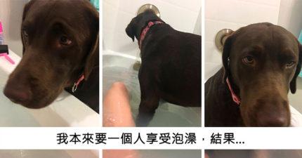 22則證明「有狗狗的人生超幸福」的超可愛貼文