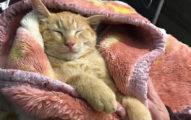 他露營遇「霸氣自來貓」吃光蝦子還睡到偷笑,網友笑說:「直接打包外帶!」