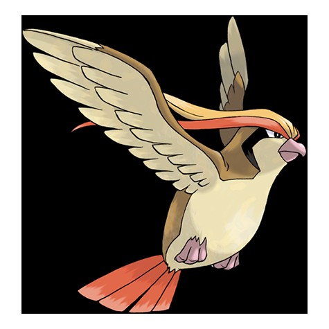 bird_pokemon_pidgeot