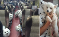 愛犬過幾天就要死,一整個巴士的毛小孩「萌又療癒」陪他走最後一程...