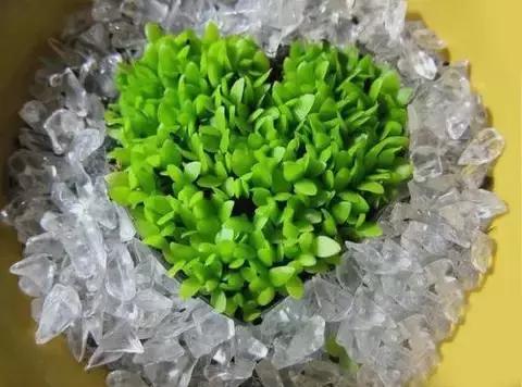 把火龍果種子分離出來 種下去「成果比火龍果還神奇」!
