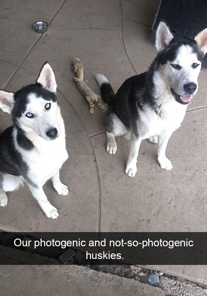 funny-husky-dog-posts-36-5834389491ee3__700